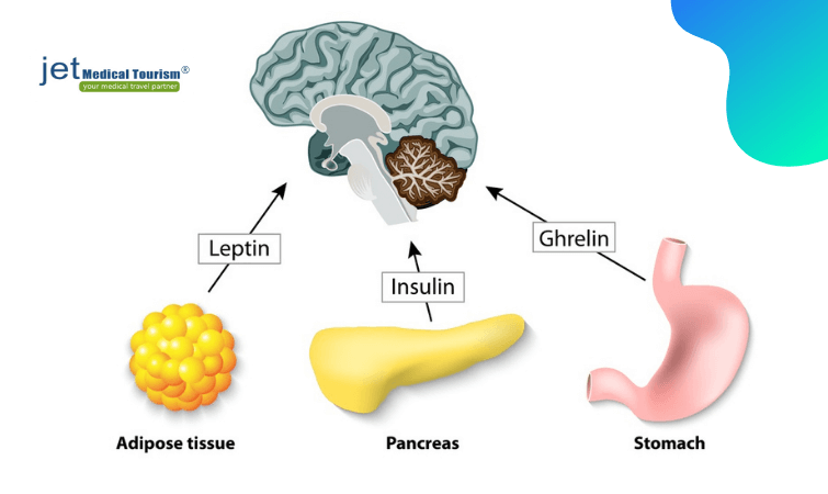 Function of ghrenlin